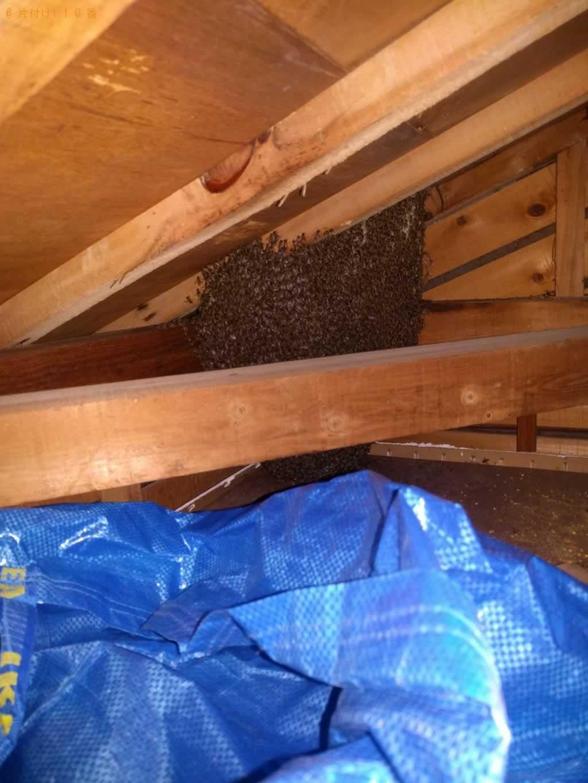 ミツバチ駆除施工前