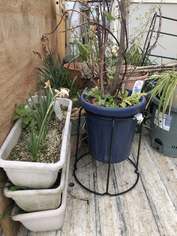 【京都市左京区】中身の入った植木鉢などの回収 お客様の声