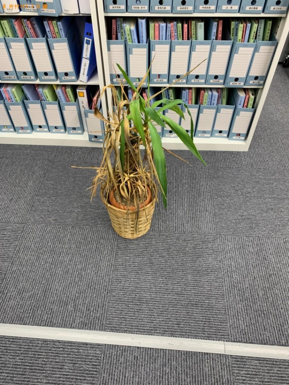 【京都市下京区】観葉植物の回収・処分ご依頼 お客様の声