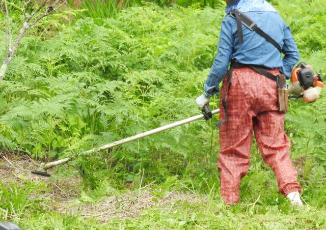 京都市で草刈りにかかる料金相場は?追加料金や業者選びのコツまで解説