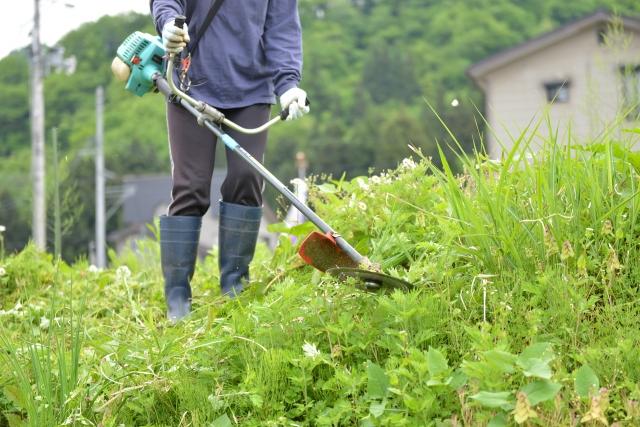 亀岡市で草刈りに最適な年3回の時期~楽に草刈りを終えるコツまで徹底解説